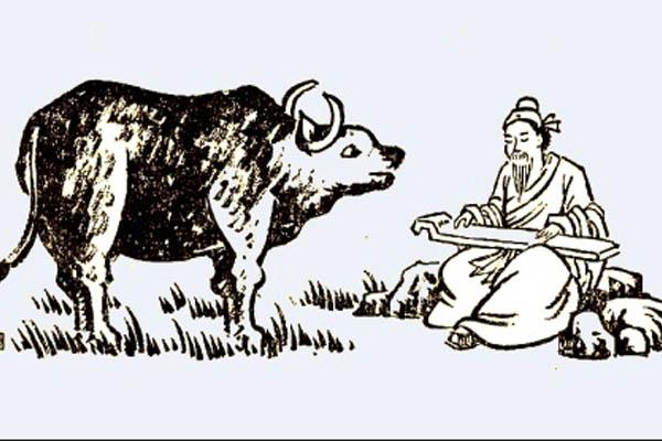 Vaca y Maestro